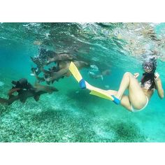Snorkelling in Shark Ray Alley Snorkelling, Belize, Shark, Vacation, Outdoor Decor, Instagram Posts, Vacations, Holidays Music, Sharks