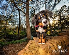 """""""Great things are done when men and mountain (dogs) meet"""" - Haute Dog Proverb 3:1"""