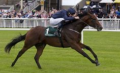 Air Force Blue to shuttle to Australia  https://www.racingvalue.com/air-force-blue-to-shuttle-to-australia/