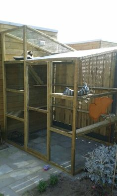 Outdoor Cat Enclosure More
