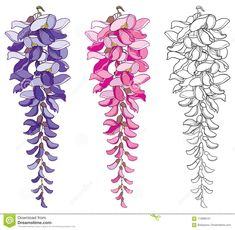 Vector Set Of Outline Wisteria Or Wistaria Flower Bunch And Bud In Black Pink And Pastel Purple Isolated On White Background Stock Vector - Illustration of garden linear 113888101 Flower Line Drawings, Flower Drawing Tutorials, Watercolor Flowers, Watercolor Paintings, Floral Drawing, Spring Design, Pastel Purple, Bunch Of Flowers, Arte Floral