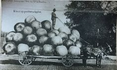 A load of good Apples by Martin Post Card Co. 1909 by LoveThisOldHouse on Etsy