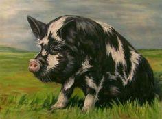 Kune Kune Pig Oil Painting Pig Pet Portraits Farm Animal Commission Art, painting by artist Debra Sisson Farm Paintings, Animal Paintings, Farm Animals, Animals And Pets, Funny Animals, Kune Kune Pigs, Pig Drawing, Oriental Cat, Whippet Dog
