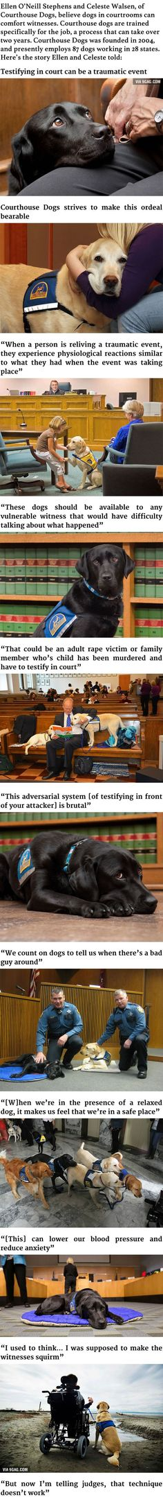 These Courthouse Dogs Are Trained To Comfort Witnesses In Courtrooms - 9GAG