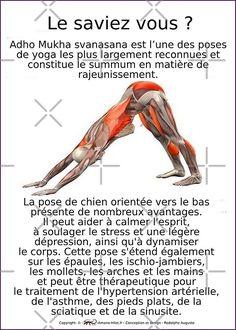 Ashtanga Vinyasa Yoga, Iyengar Yoga, Namaste Yoga, Yin Yoga, Yoga Meditation, Yoga Sequences, Yoga Poses, Yoga Fitness, Asana