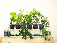 Aquaponics Garden 6-planter Aquaponics System Desktop Herb