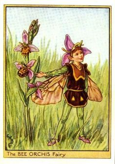 Cicely Mary Barker ~ The Bee Orchis Fairy