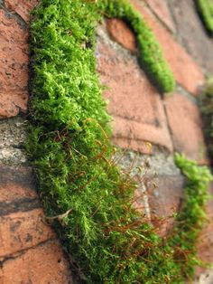 I found this recipe for Moss Graffiti on Instructables . In a blender combine: 1 cups buttermilk A few handfuls of moss Moss Grafitti, Graffiti I, Dream Garden, Garden Art, Diy Garden, Moss Art, Garden Inspiration, The Great Outdoors, Garden Landscaping