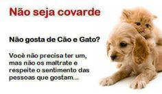 Não seja covarde. Não gosta de cães e gatos, não precisa ter um, mas não os maltrate e respeite os sentimentos das pessoas que gostam #proteja #salve #animais http://timevencedor.com