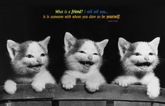 Funny Family Quotes And Sayings | Funny Cats with Friendship Quotes and Sayings Images for Teenage Girls ...