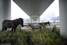 Image result for horses huddled
