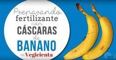 Cómo preparar fertilizante con cáscaras de banano o plátano