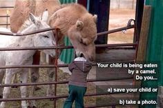 When a camel eats your child. . .