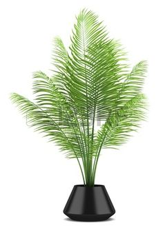63 Best Tree Pot Images Tree Planters Landscaping