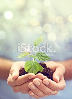 A cropped image of a hands holding a plant growing in. Royalty Free Images, Royalty Free Stock Photos, Business Stock Photos, Green Business, Image Now, Flowers, Plants, Photography, Logos