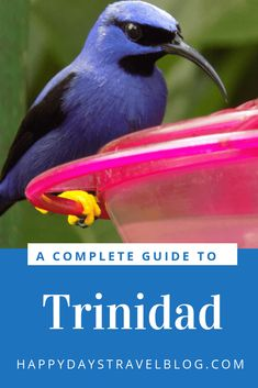 Are you planning a trip to Trinidad? Read this article for everything you need to know - essential facts, where to eat, what to see and do. #travel #travelblogger #Caribbean #Trinidad