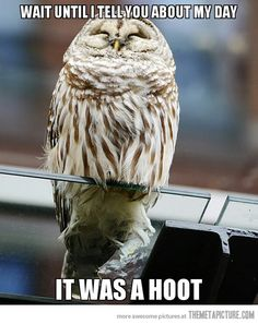 Owl's greatest day…