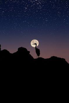 Moon Stars & Blue Herring Silhouette, by Larry Brown.