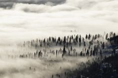 Acre Woods' by Donald Sewell on Capture Inland Northwest // Surreal and mysterious. Blanket of Fog moves in and around trees of the Colville National Forest below North Baldy Mountain, Usk WA. Print ID 100 Acre Wood, North West, Mysterious, Surrealism, Woods, Mystery, Thankful, Trees