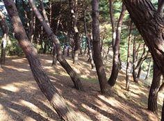 月明洞の林