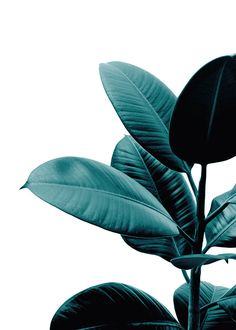 Trendy poster of plant