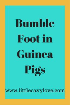 97 Best Guinea Pig Health images in 2017 | Guinea pigs