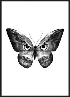 Owlifly - Sanna Wieslander