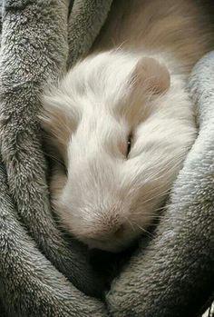 Soft piggy warm piggy little ball of hair (not fur)