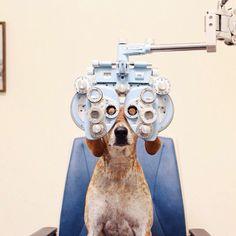 Já fez o seu teste de visão? #dog #lovedog