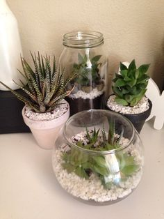 DIY succulents for desks. They give it a cute little touch and they are super easy to look after.