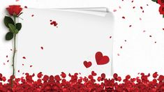 Closeup Of Red Rose Petals Valentines Day Border, Valentines Day Background, Valentine Day Love, Red Rose Petals, White Rose Flower, Red Roses, Love Background Images, Love Backgrounds, Red Rose Love