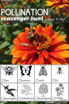 As Spring and Summer roll around, it's the perfect time to get outside with the kids and watch pollination happen right before your eyes! Today we're sharing a pollination scavenger hunt to help guide observation, as well as some ideas for ways to help po Flower Activities For Kids, Bee Activities, Nature Activities, Outdoor Activities For Kids, Outdoor Learning, Science For Kids, Science And Nature, Kids Learning, Science Ideas