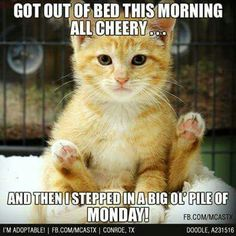 Ideas Humor Monday Morning Kitty For 2019 Wednesday Humor, Monday Humor, Monday Quotes, Cat Quotes, Funny Quotes, Monday Morning Humor, Funny Monday, Sleep Quotes, Animal Quotes
