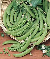 Pea, Super Snappy The largest (sugar-podded) pea. The pods are as tasty as the peas inside. Growing Vegetables, Fruits And Veggies, Vegetable Gardening, Burpee Seeds, Grow Organic, Garden Seeds, Garden Plants, Organic Living, Veggies