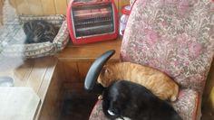난로앞의 고양이들