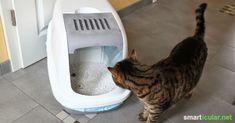 Das Wundermittel gegen Gerüche aus dem Katzenklo