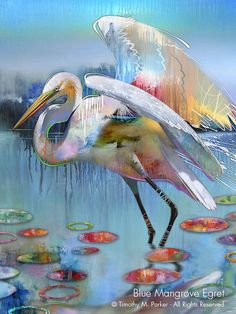 Contemporary Bird Art Gallery Naples FL