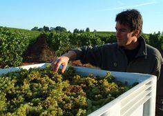 North Coast AVA    Wine Regions   Gold Medal Wine Club