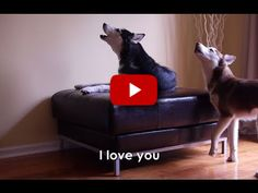 Two Dogs Have Intense Conversation. Cannot Miss This One! Guaranteed You Will ROFL!   FamilyPet