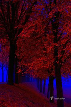 ~~Who is afraid of Red and Blue | surreal forest landscape | by Lars van de Goor~~