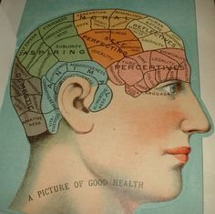 1916 Vintage Anatomy Chart