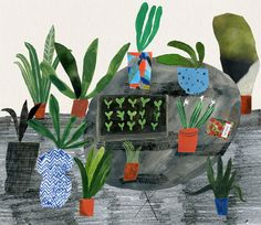 Pot Plants Outside - Emma Lewis