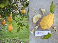 Archives for Luty 2015 Fruits And Vegetables, Pear, Food Photography, Lemon, Green, Cedar Trees, Recipes, Fotografia, Fruits And Veggies