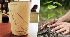 Une tasse de café biodégradable qui fait pousser un arbre un fois jetée dans la nature