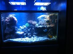 150 Gallon Saltwater Reef Set Up we service at Simply Thai [Resturant], Lousville, KY