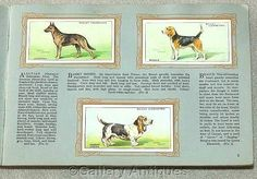 Dogs - Vintage Full Set of 50 Cigarette Cards in Original Album by W. D. & H. O. Wills Issued in 1937 by GalleryAntiques