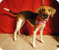 KILL Shelter, Weatherford, TX - Hound (Unknown Type) Mix. Meet Mila a Dog for Adoption. Want a fun dog, easy to train? Give Mila another chance in life and she'll make a great, loving addition to that forever family she's waiting for. 817-598-4111.