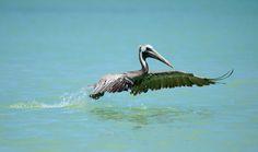 Birds In Flight, Mexico, Animals, Animales, Flying Birds, Animaux, Animal, Animais, Mexico City