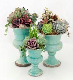 Succulents Diy 35