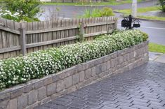 Hedge experiments with Daphne and Leptospermum - GardenDrum Pergola With Roof, Outdoor Pergola, Pergola Shade, Patio Roof, Diy Pergola, Pergola Ideas, Front Yard Flowers, Pergola Decorations